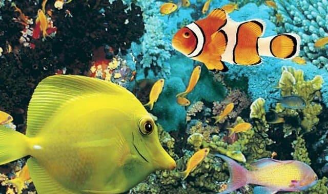 Quebec aquarium package